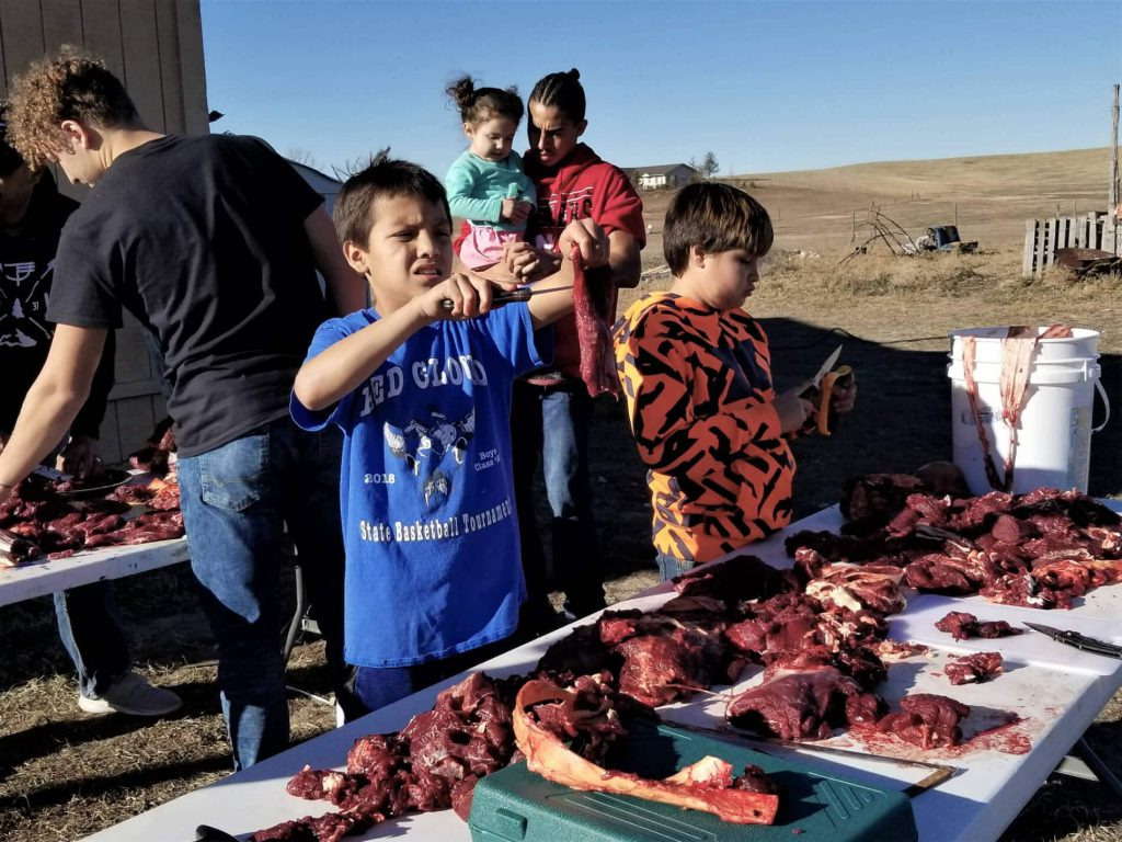Buffalo Are the Backbone of Lakota Food Sovereignty