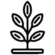 Plantas Comestibles<br>y Medicinales