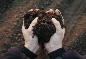 Hands holding heath-shaped soil